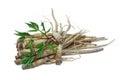 Fresh Ginseng Root. Royalty Free Stock Photo