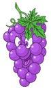Fresh grapes cartoon
