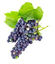 Fresh grapes wine with green leawes on white background Stock Photos