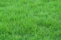 Fresh grass Royalty Free Stock Photo