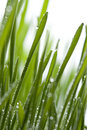 Fresh grass with dew Stock Photos
