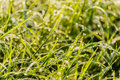 Fresh grass with dew drops and bokeh lights. Spring or summer ba