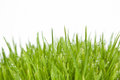 Fresh grass with dew drops on white background Royalty Free Stock Images
