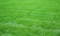 Fresh grass field of green in park Royalty Free Stock Photo