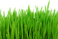 Fresh grass isolated on white Royalty Free Stock Photo
