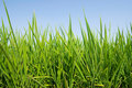 Fresh Grass land under blue sky Stock Photos