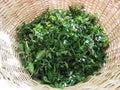 Fresh green bio mint in a bascket