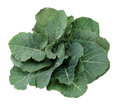 Fresh Green Cabbage Leaf Royalty Free Stock Photo