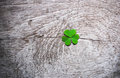 Fresh green clover leaves over wooden background, Royalty Free Stock Photo