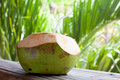 Fresh green coconut on palm tree background Stock Photography