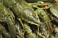 Fresh green crayfish background abstract Stock Photo