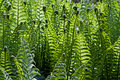 Fresh Green Fern Frond Royalty Free Stock Photo