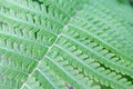 Fresh green fern leaf closeup texture background Royalty Free Stock Photo