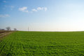 Fresh green field with telephone lines and path with trees in the background Stock Photo