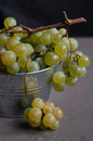 Fresh green grapes in metal bucket against dark background Royalty Free Stock Photography