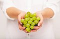 Fresh green grapes are perfect as snack freshly picked from the vineyard in woman s hands Royalty Free Stock Image