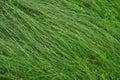 Čerstvý zelená tráva