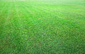 Fresh green grass background texture Royalty Free Stock Image