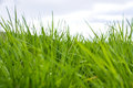 Fresh green grass on a cloudy sky Royalty Free Stock Photo