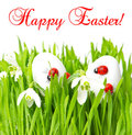 Fresh green grass with easter eggs on white Stock Photography