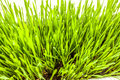 Fresh Green Grass Growing In S...
