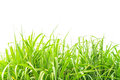 Fresh green grass isolate on white background Royalty Free Stock Photos