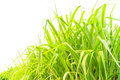 Fresh green grass isolate on white background Royalty Free Stock Images
