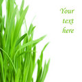 Fresh green grass isolated on white background Stock Photography