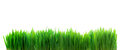 Fresh green grass isolated on white panoramic image of background Stock Photos