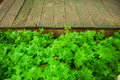 Fresh green grass and leaf plant over wood fence background nature Royalty Free Stock Photo