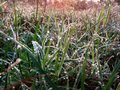 Fresh green grass with morning dew drops Royalty Free Stock Photo