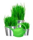 Fresh green grass in small metal buckets and water can isolated Royalty Free Stock Photo