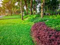 Fresh green grass smooth lawn curve form of bush, trees on background, good care maintenance landscapes in public Royalty Free Stock Photo