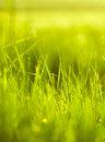 Fresh green grass in spring season close up view of Stock Photo