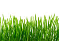 Fresh Green Grass with water drops Isolated on White Background Royalty Free Stock Photo