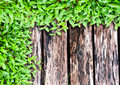 Fresh green grass on wood Stock Photos