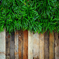 Fresh green grass and Wood Royalty Free Stock Photography