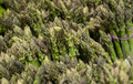 Fresh green and healthy asparagus in bunches Royalty Free Stock Photo