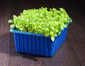 Fresh green herbs in the blue box Royalty Free Stock Photo