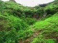 Fresh green hill Стоковая Фотография