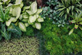Fresh green indoor plants background top view of house Stock Images