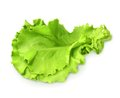 Fresh green leaf lettuce Royalty Free Stock Photo