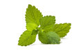 Fresh green leaf of melissa lemon balm over white Royalty Free Stock Photography