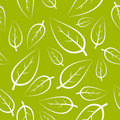 Fresh green leafs texture Royalty Free Stock Photo