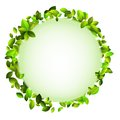 Fresh green leaves border. + EPS10 Royalty Free Stock Photo