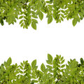 Fresh green leaves border. Royalty Free Stock Photo