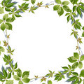 Fresh green leaves border on white Stock Photo