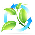 Fresh green leaves icon isolated on white Royalty Free Stock Photos