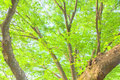 Fresh green leaves image of summer Royalty Free Stock Photos