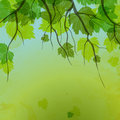Fresh green leaves on natural background. Stock Photos
